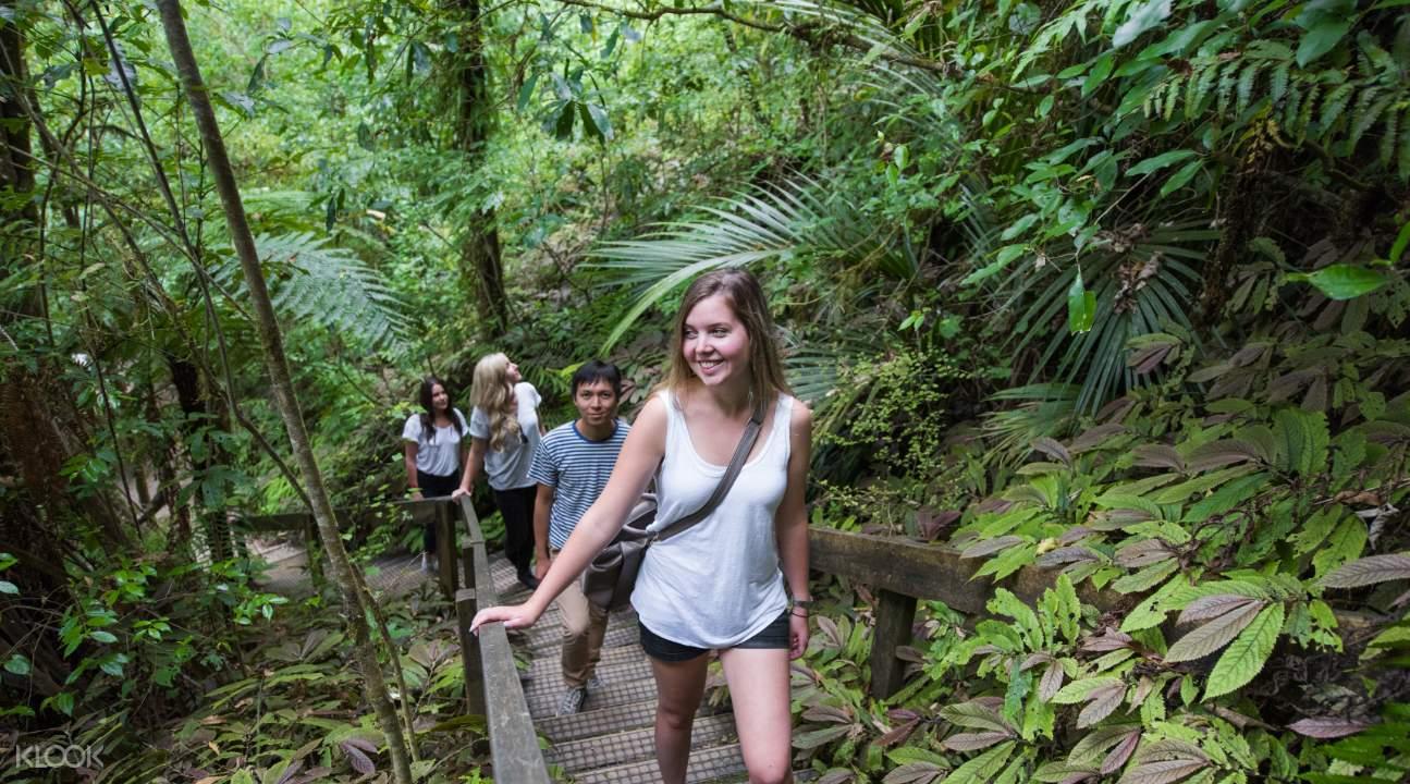 Short guided bush walk
