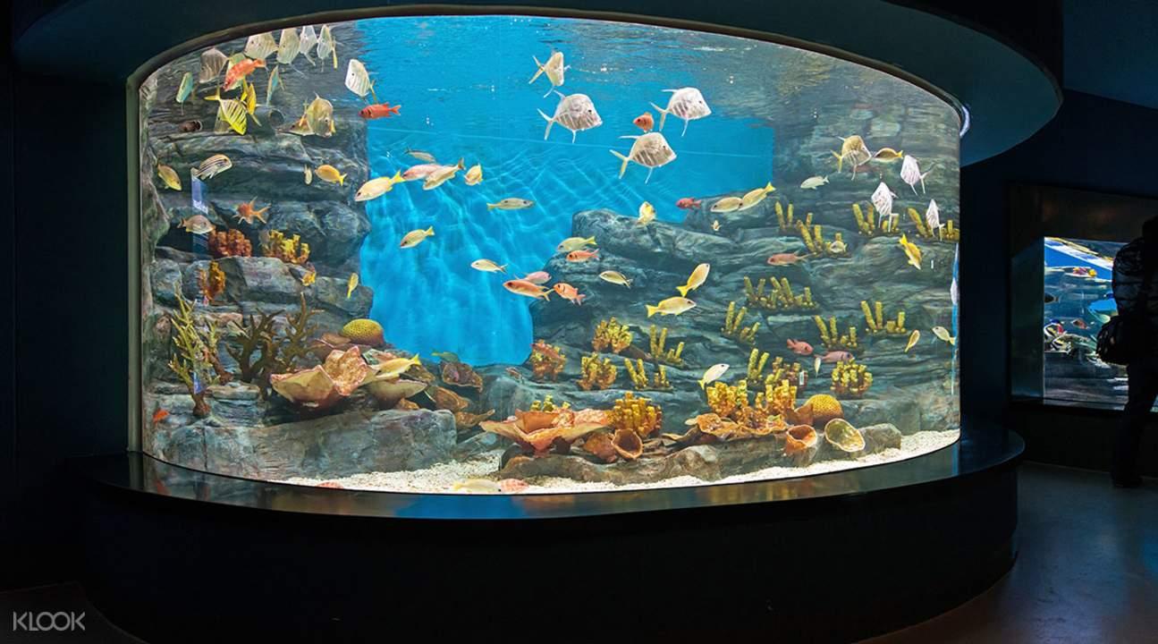 jeju island aquaplanet