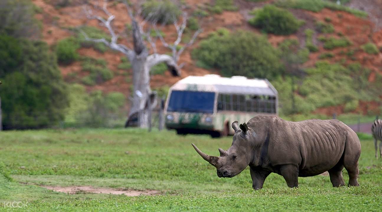华勒比野生动物园犀牛