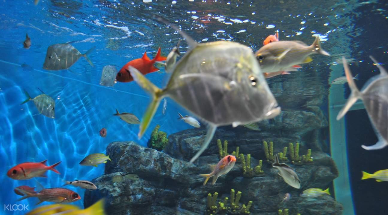 thủy cung ở đảo jeju với các loài cá địa phương