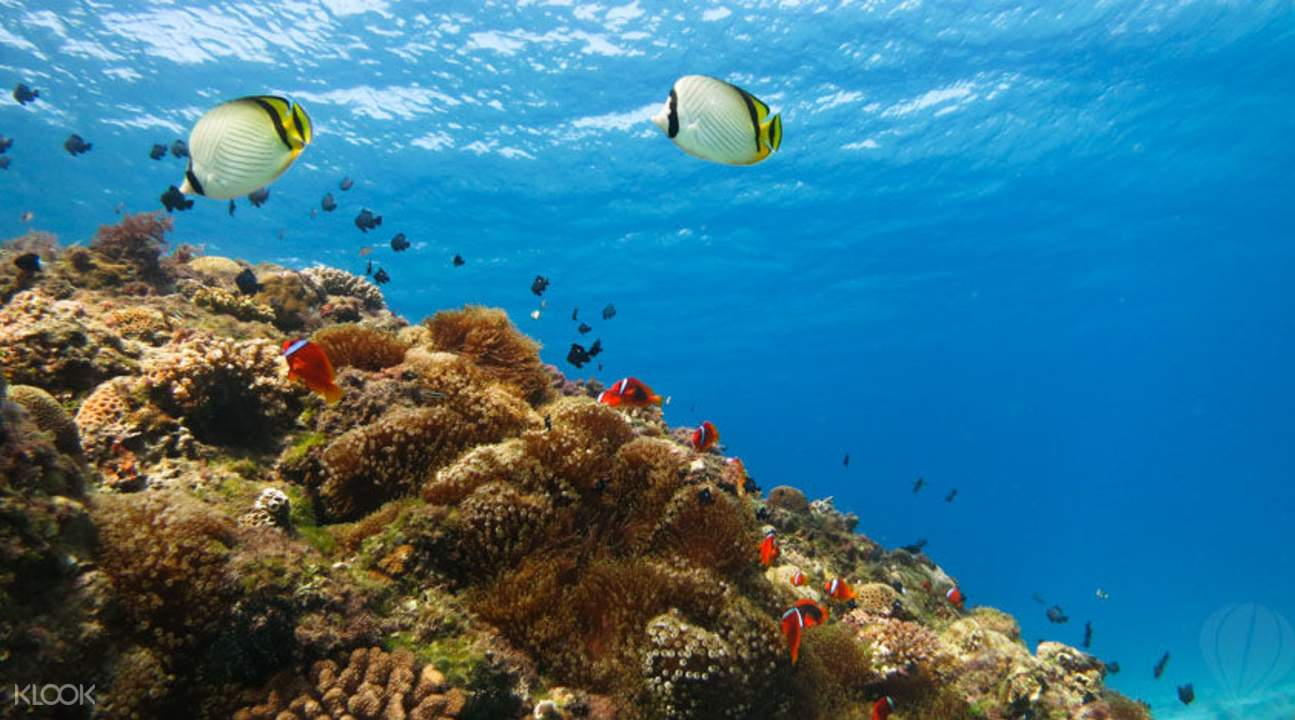 小琉球與海龜共泳潛水體驗