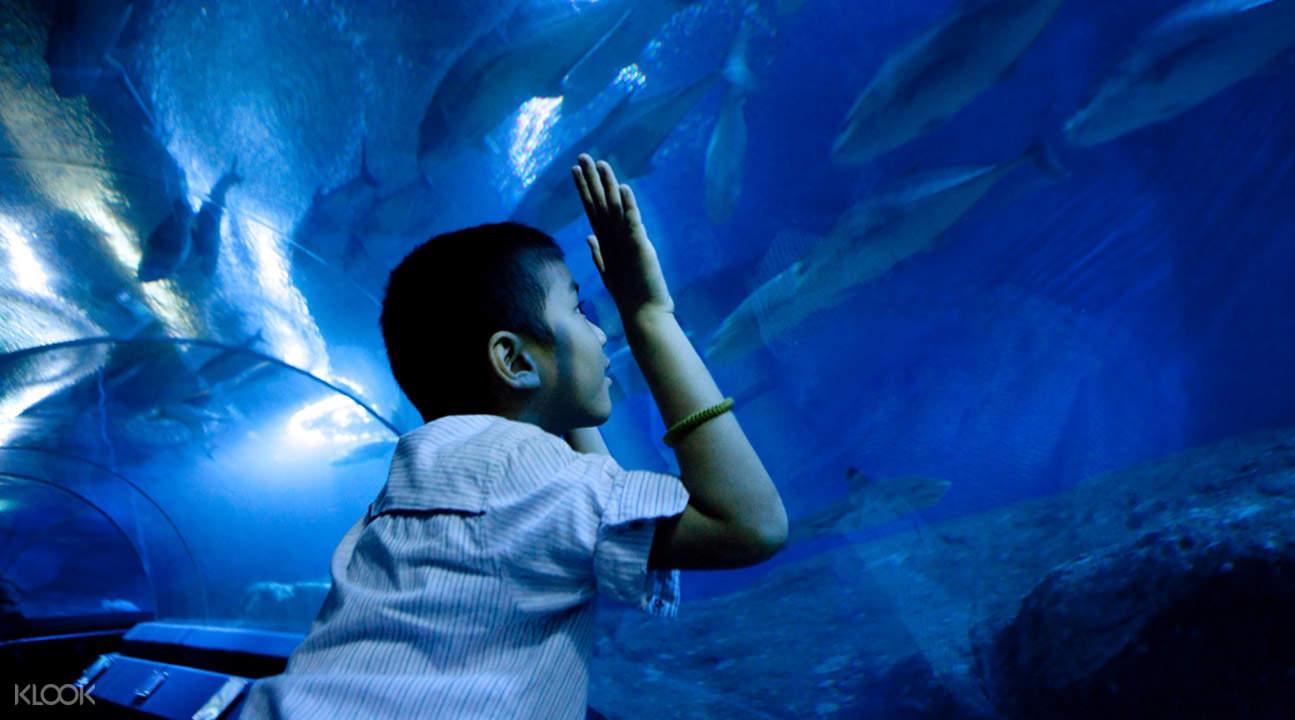 Билеты в океанариум «Подводный мир» в Паттайе