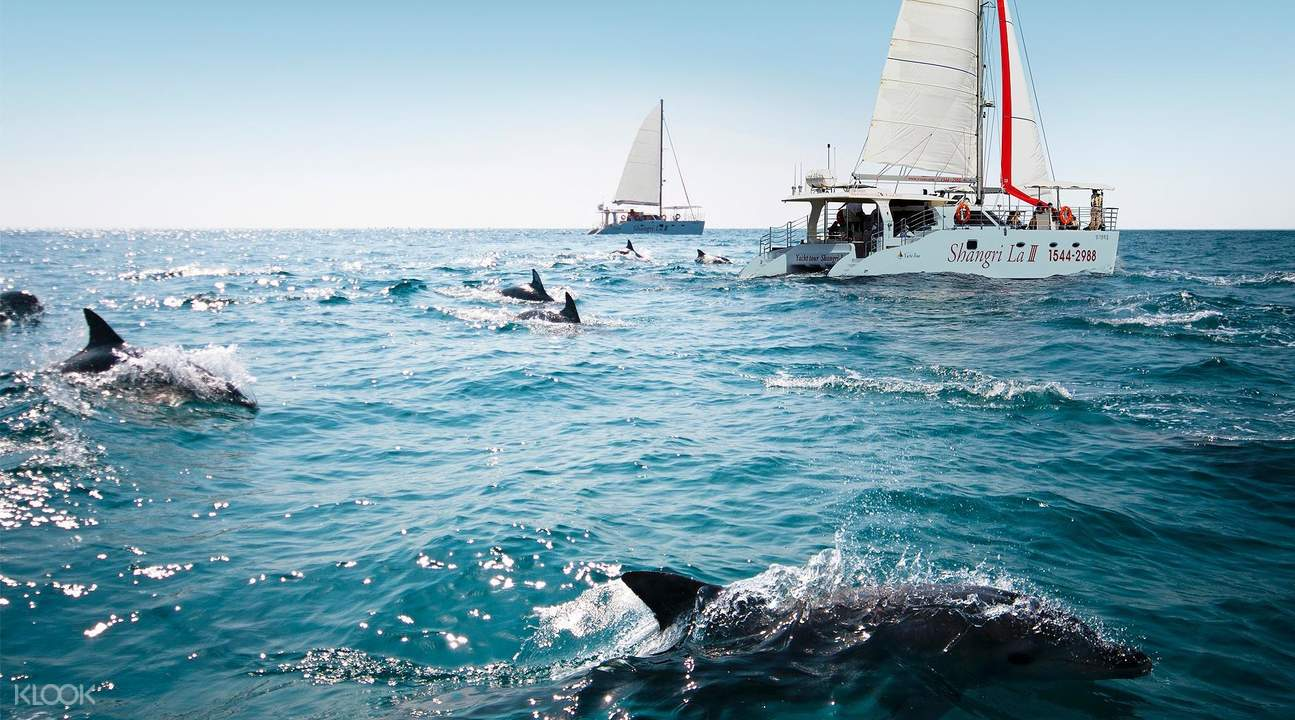 dolphins jeju island tour package