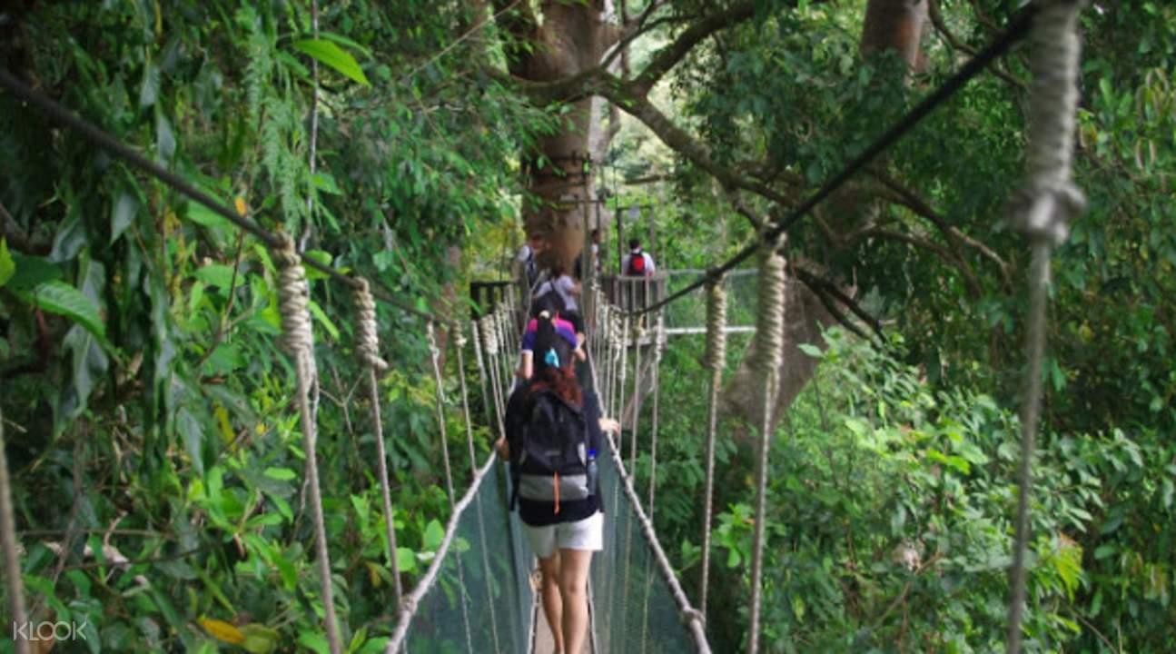 Kinabalu Park Malaysia