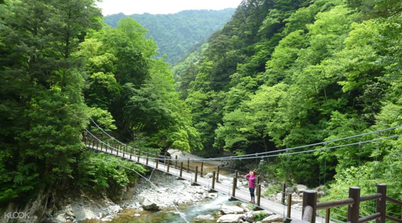 廣島三段峽蛇杉橋