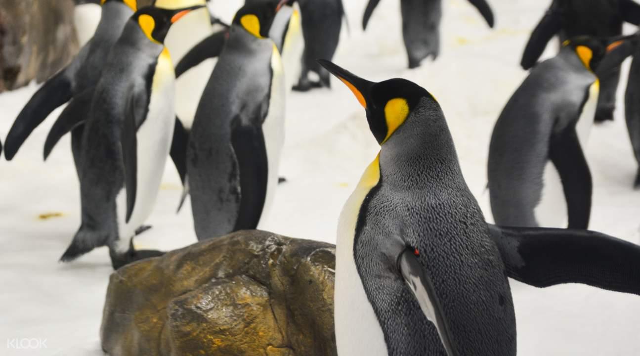 melbourne aquarium animal feedings