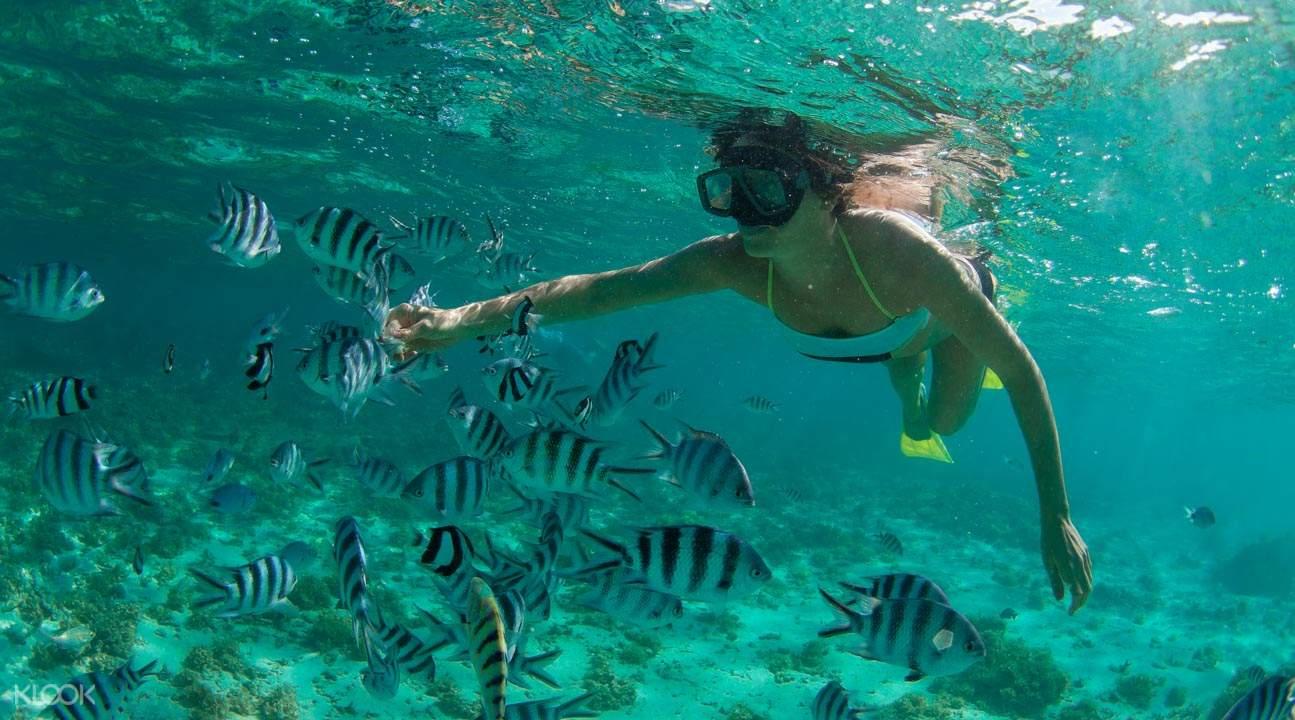 擁抱大海,體驗浮潛的樂趣