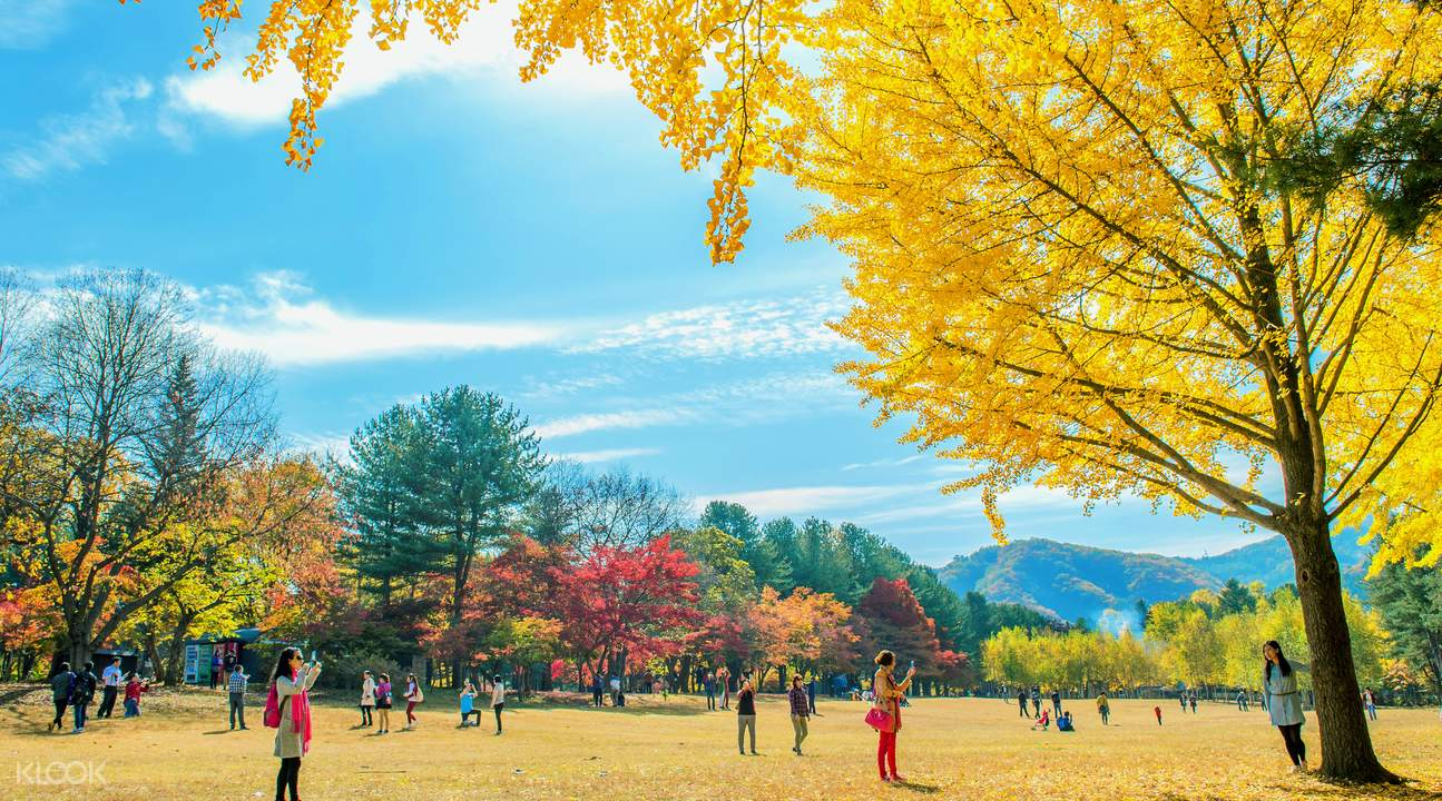 Nami island's beautiful trees