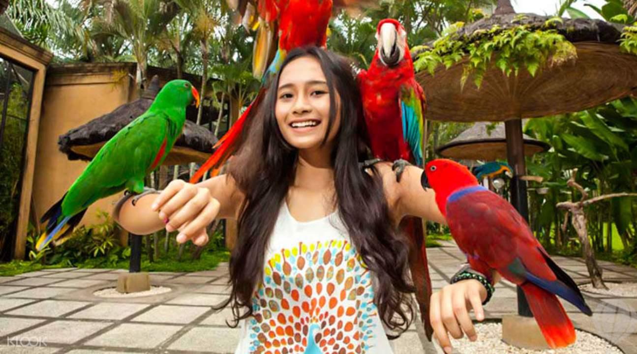 巴厘岛野生鸟园