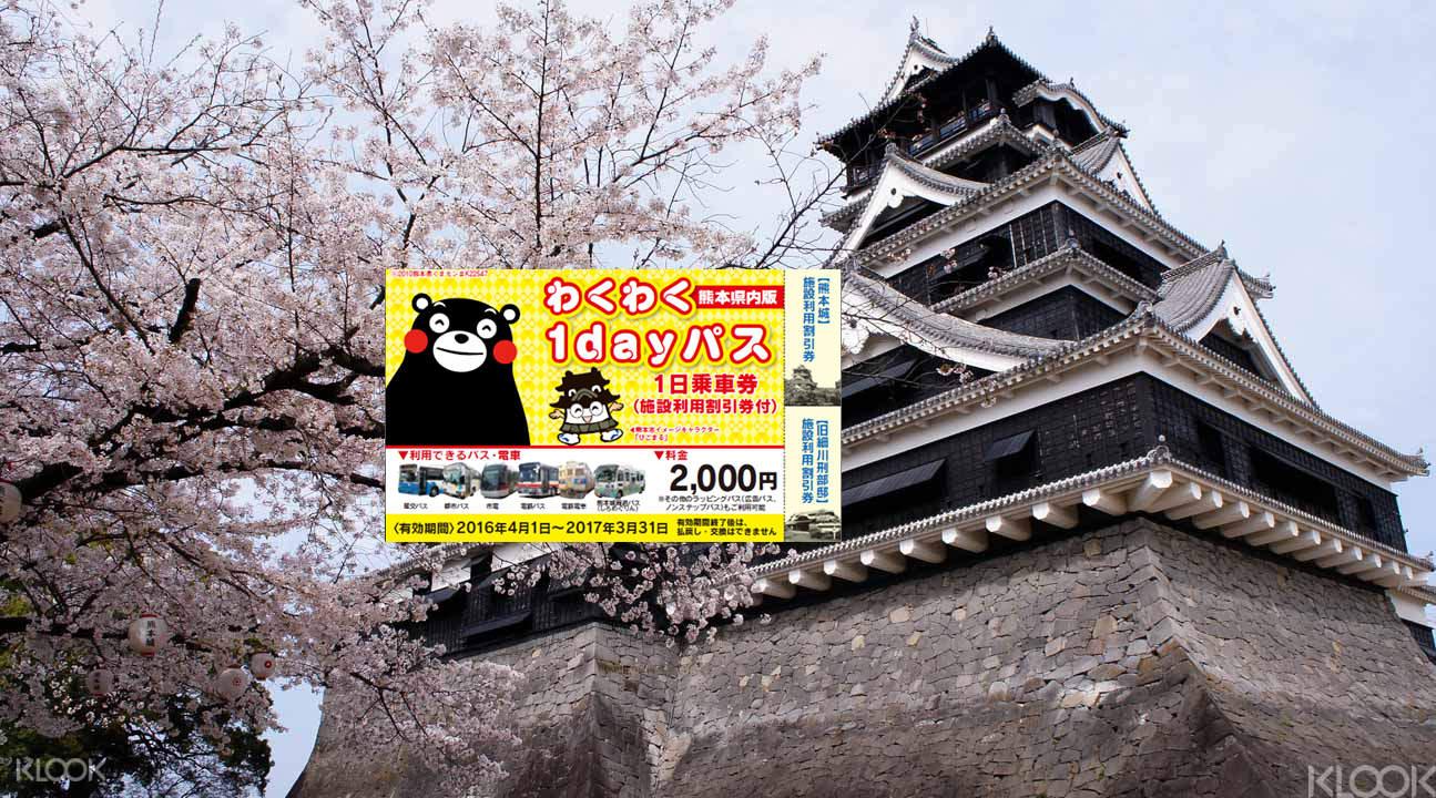 Kumamoto castle cherry blossom