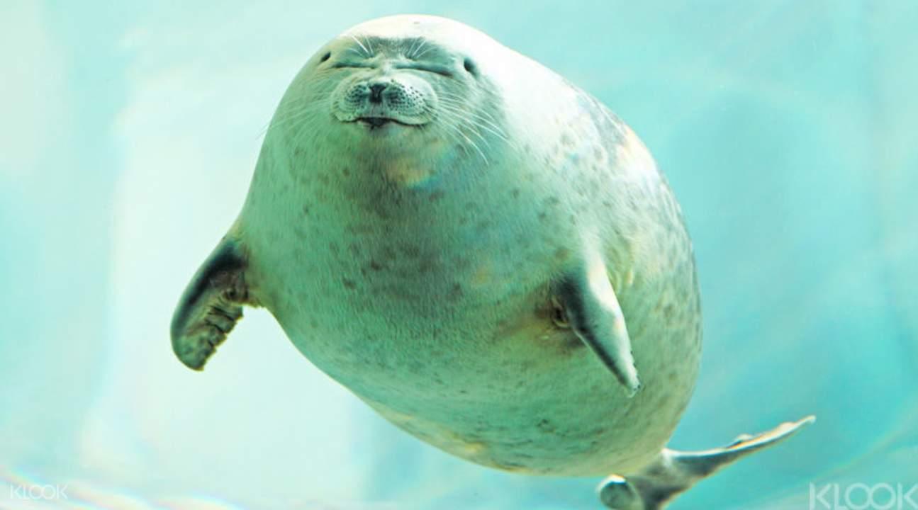 跟萌萌海豹寶寶見面