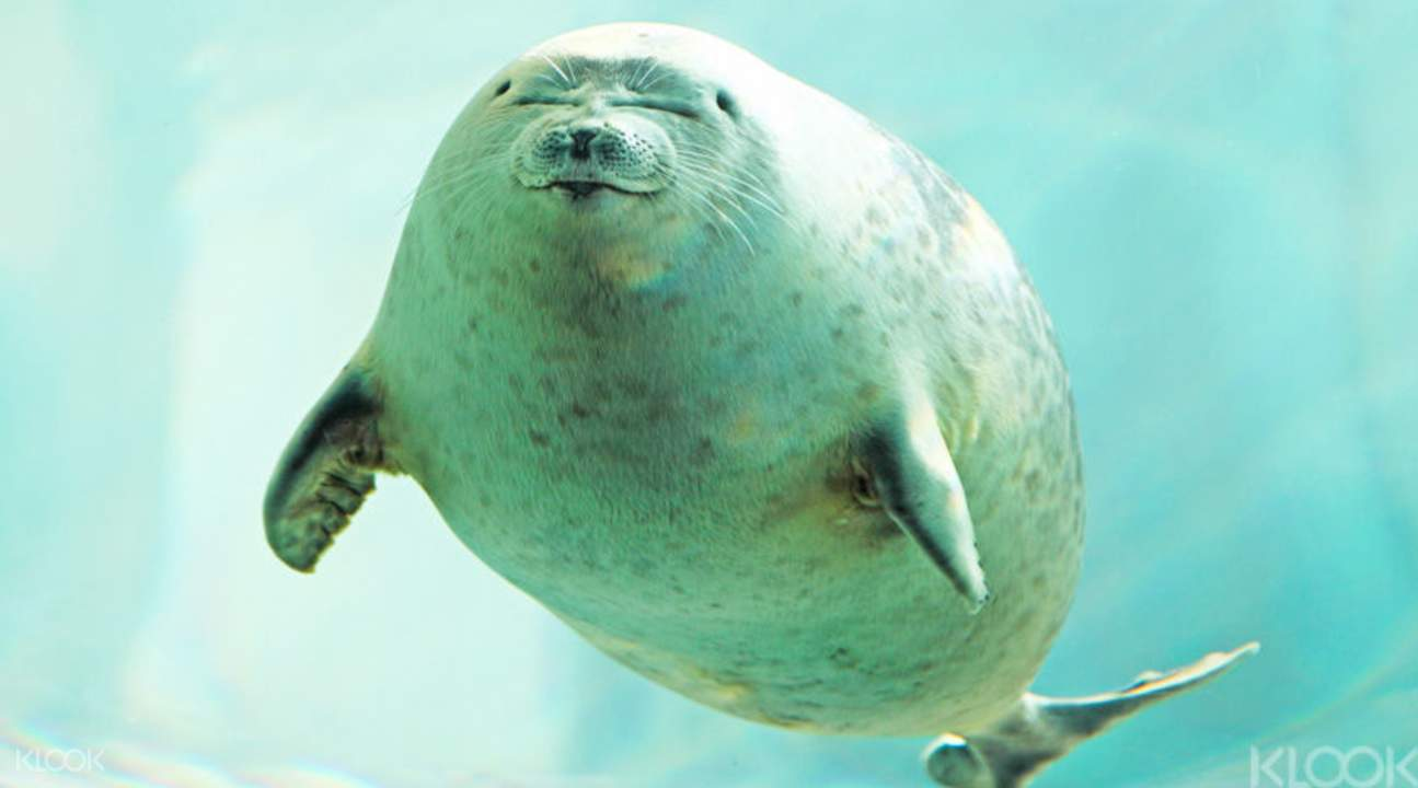 Say Hello to cute seals