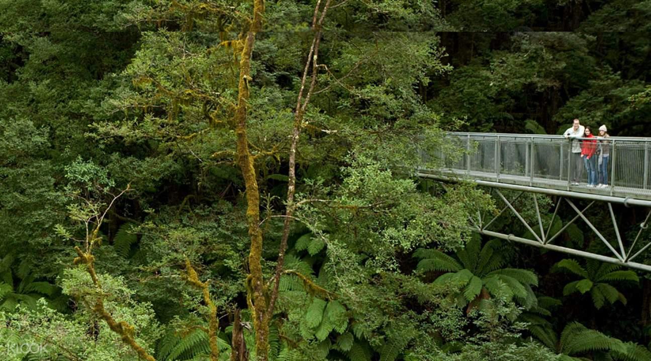 Otway Fly Treetops Walk