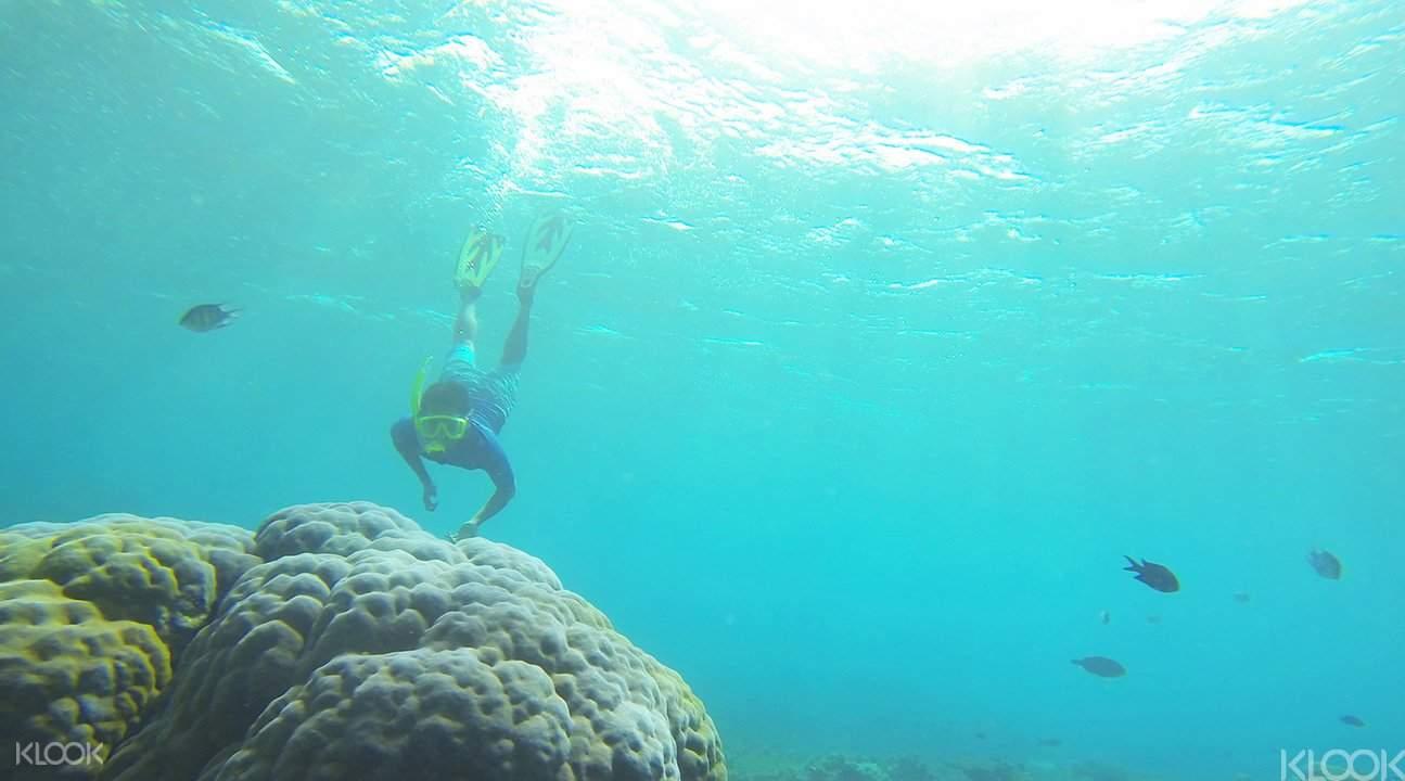 浮潛在艾湄灣水下花園