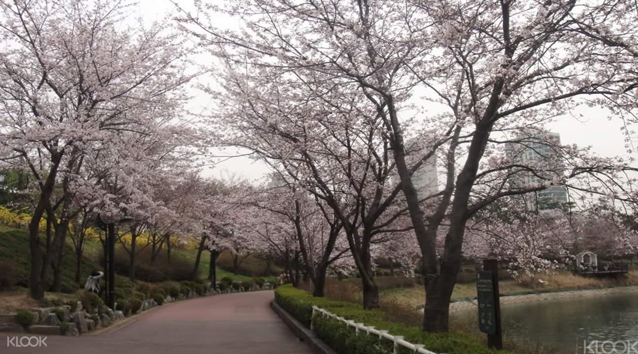赏樱玩乐园