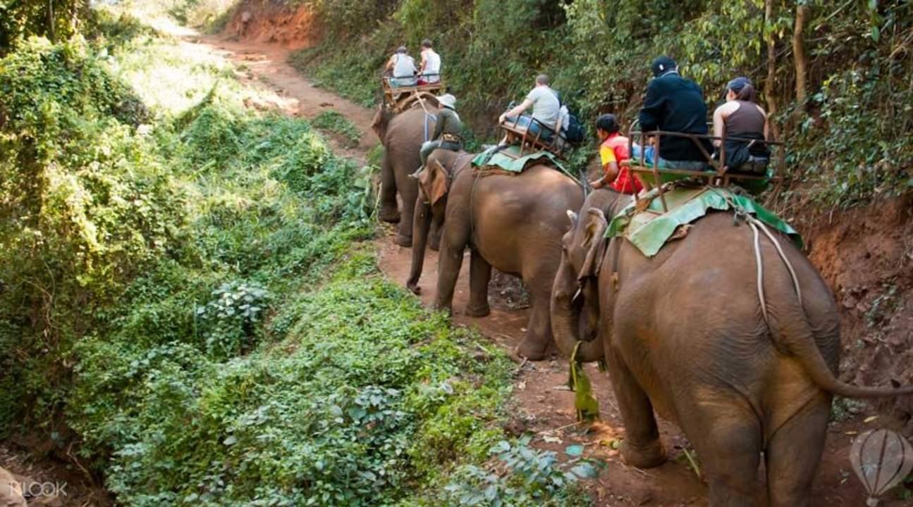 elephant trek Phuket