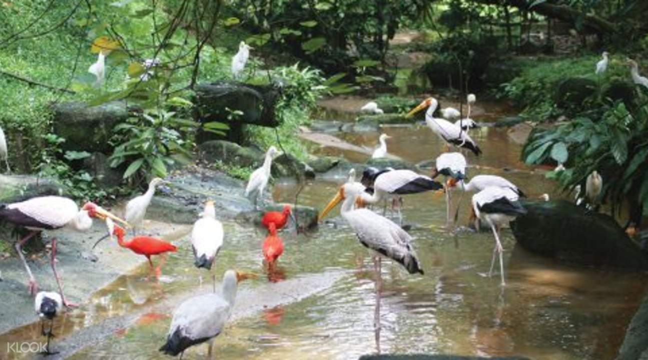 吉隆坡飞禽公园