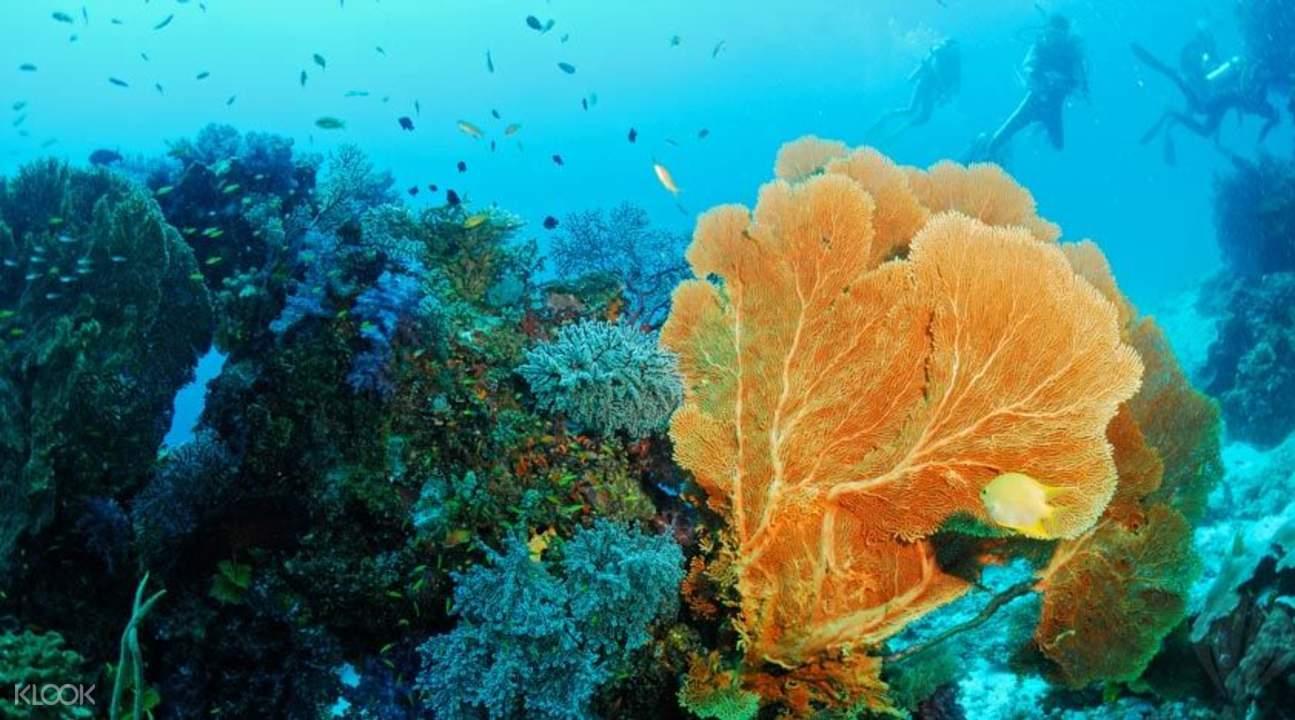 普吉斯米兰群岛一天浮潜