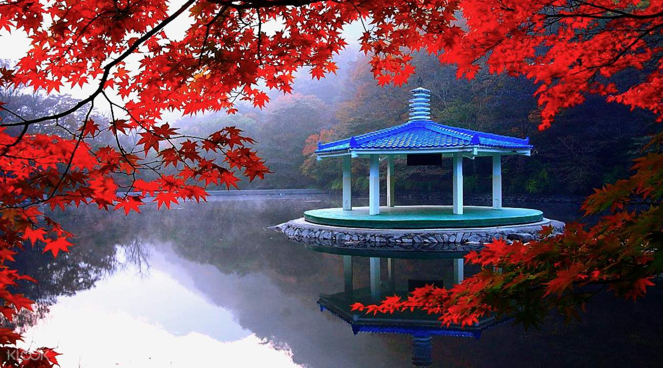 naejangsan national park day tour autumn