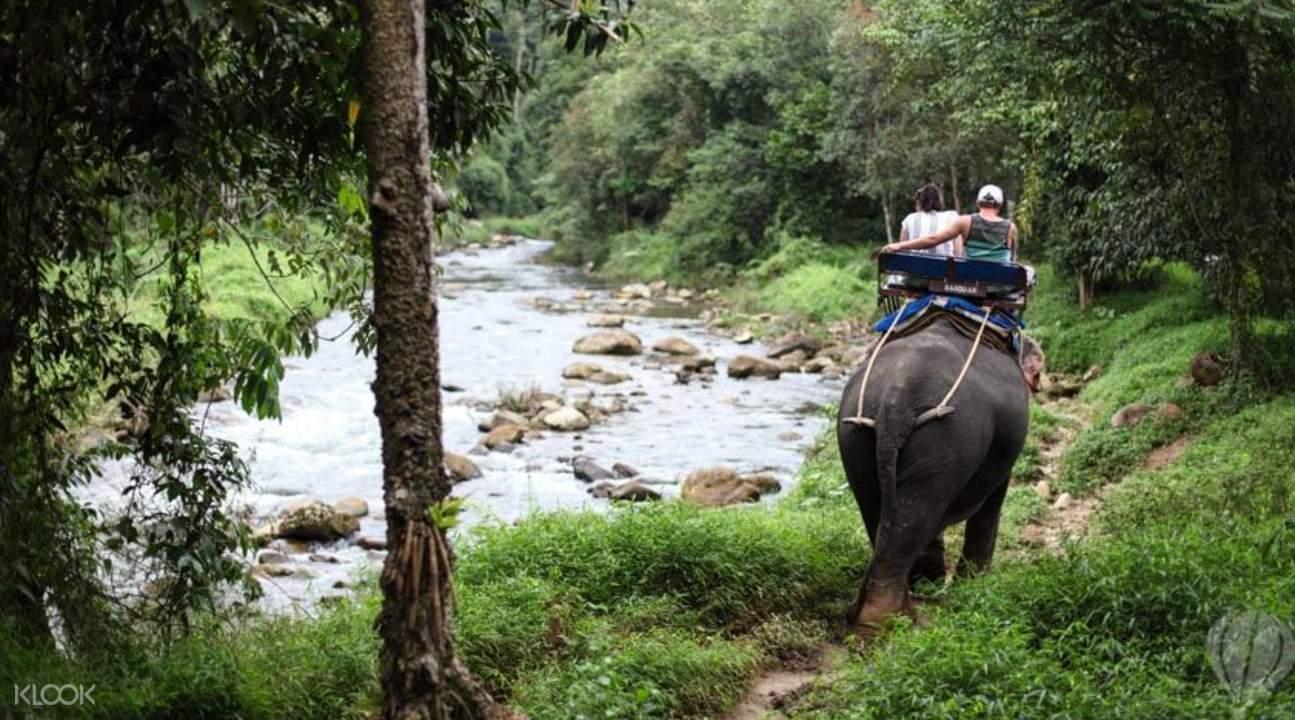 苏梅岛骑大象