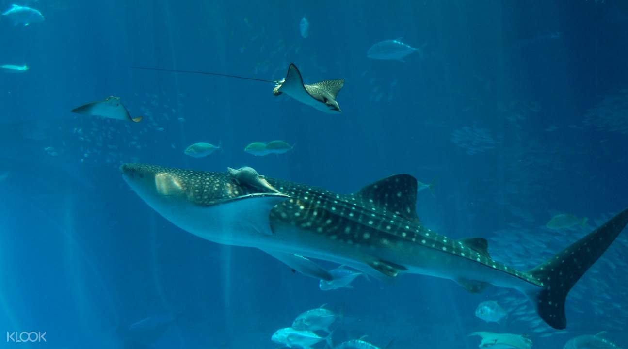 美麗海水族館魚群