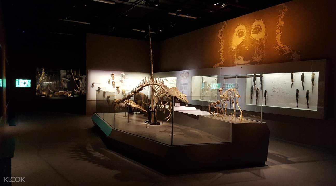 Lee Kong Chian Natural History Museum