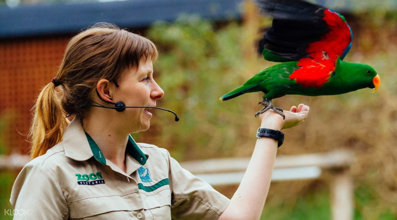 希尔斯维尔野生动物保护区鹦鹉