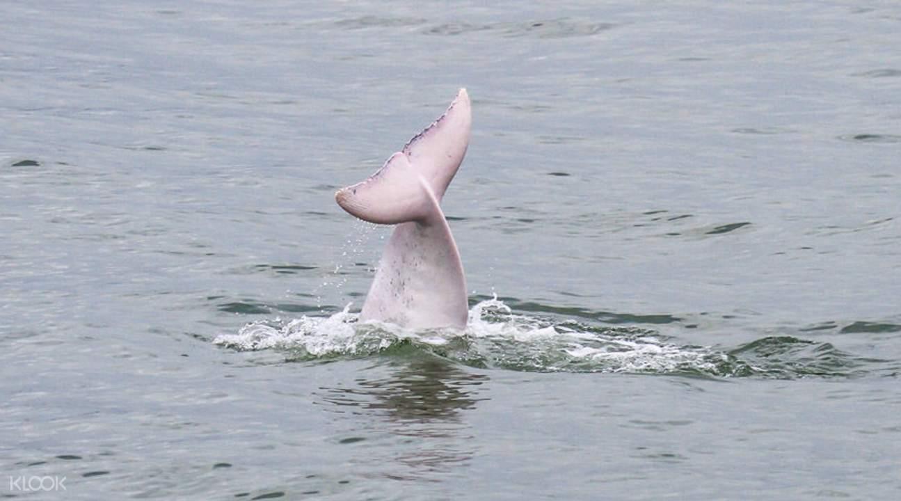dolphin tour hk