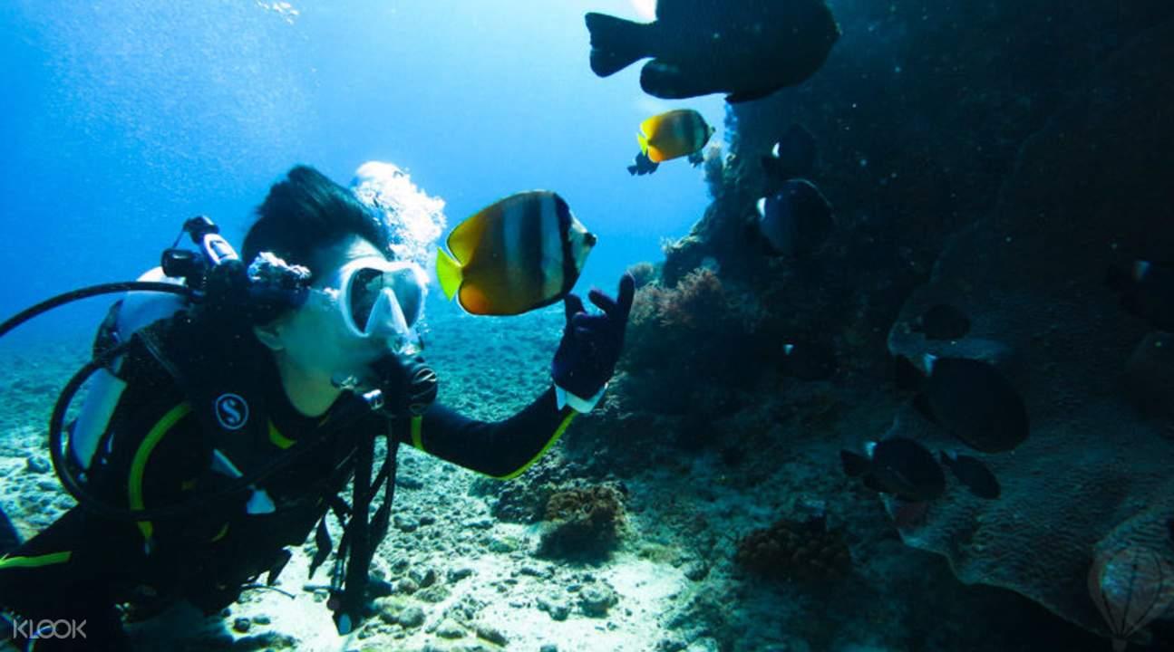 與海龜共泳潛水體驗小琉球