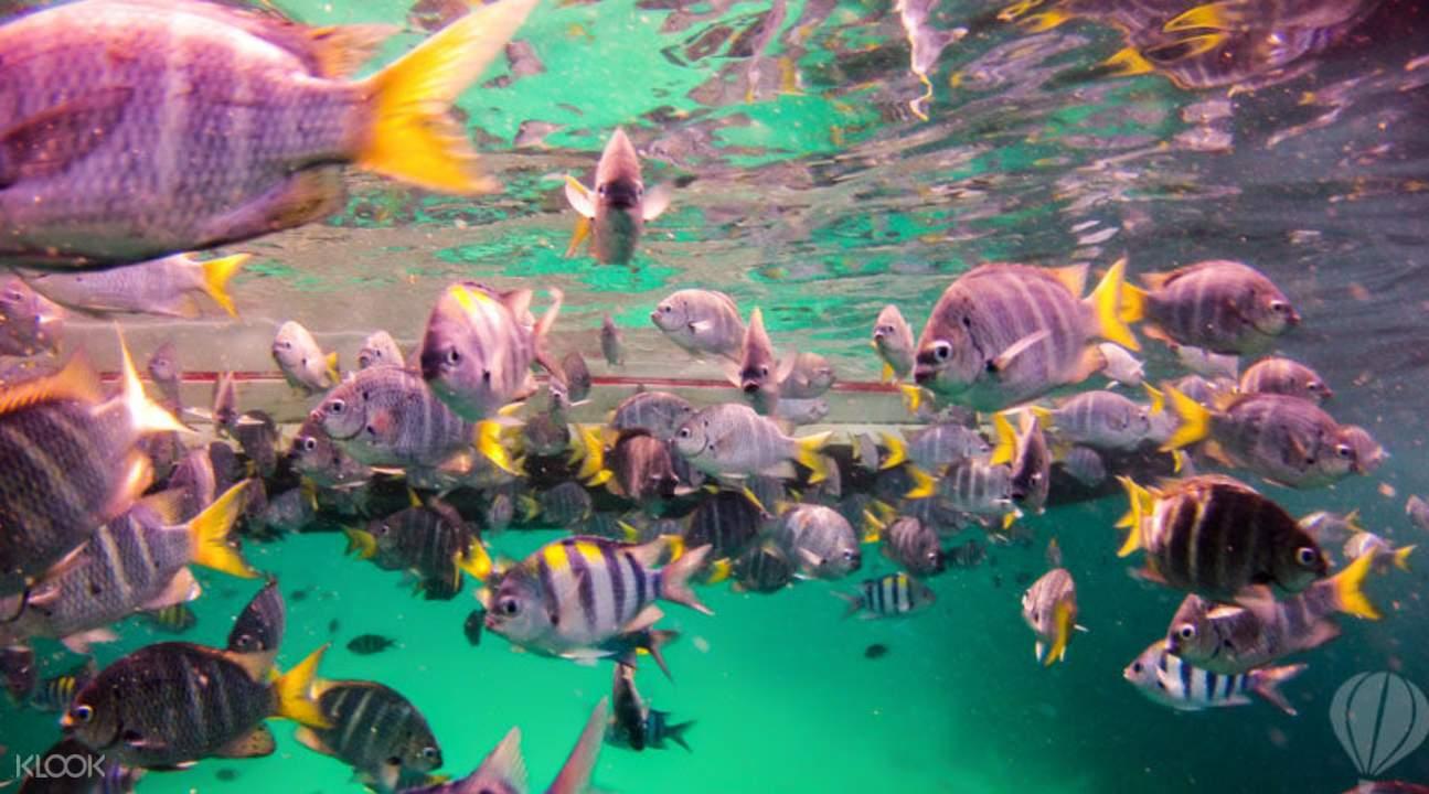 普吉皇帝与珊瑚岛一天浮潜