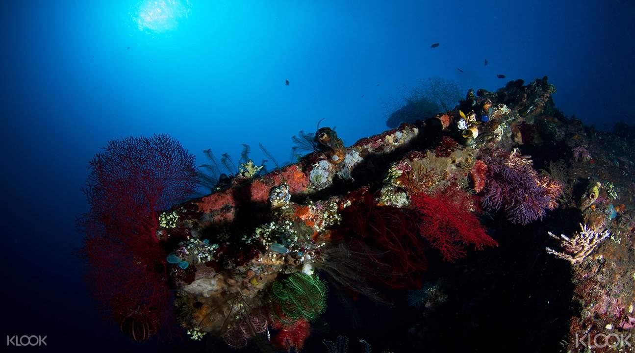 巴厘島圖蘭奔一天潜水