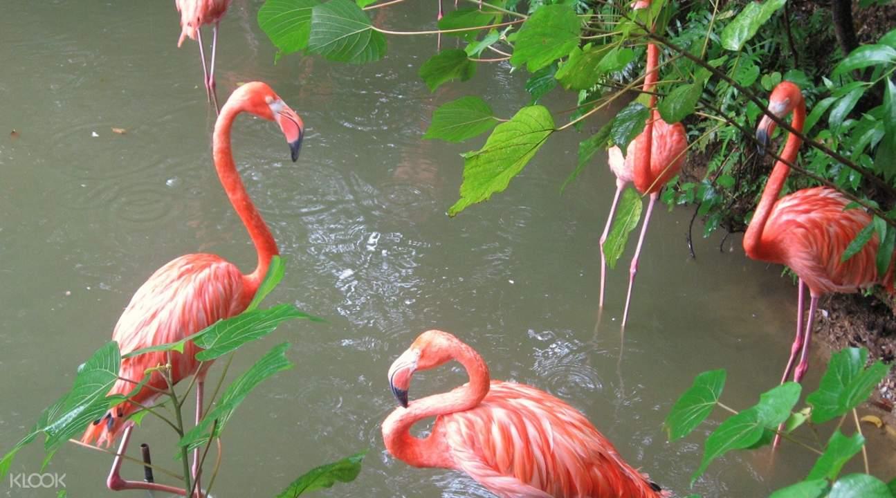 名护自然动植物公园