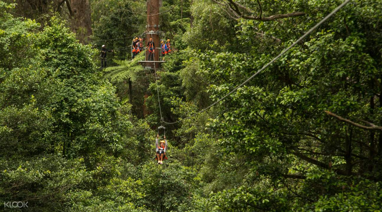 illawarra fly zipline tickets