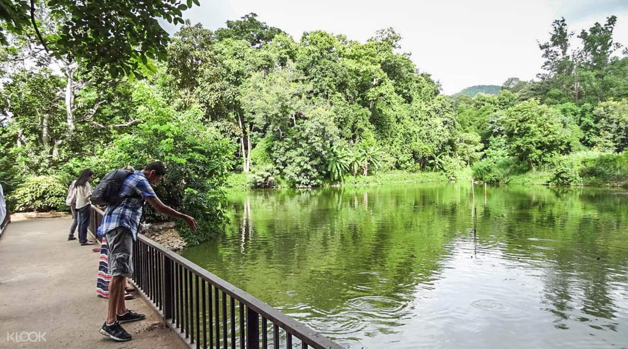 meditation retreat Chiang Mai
