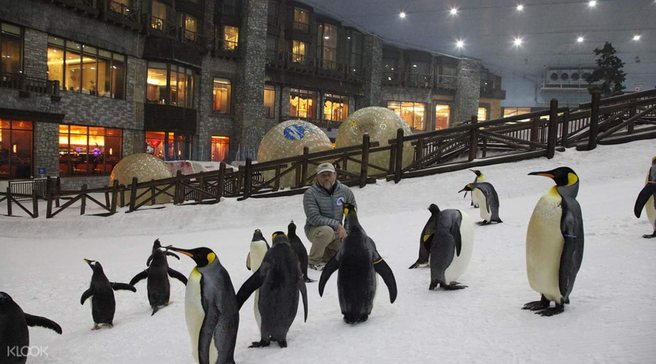 penguins dubai tourism ski dubai