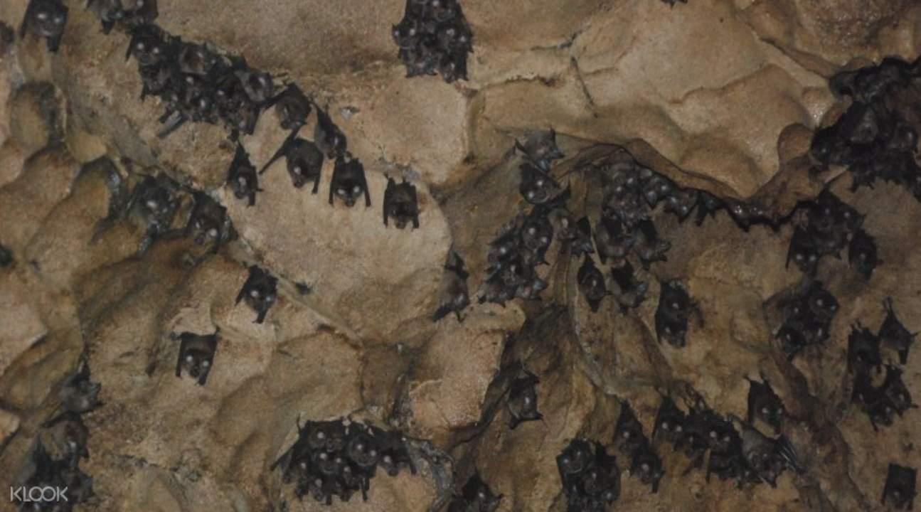 哥曼東洞穴與河畔遊船之旅