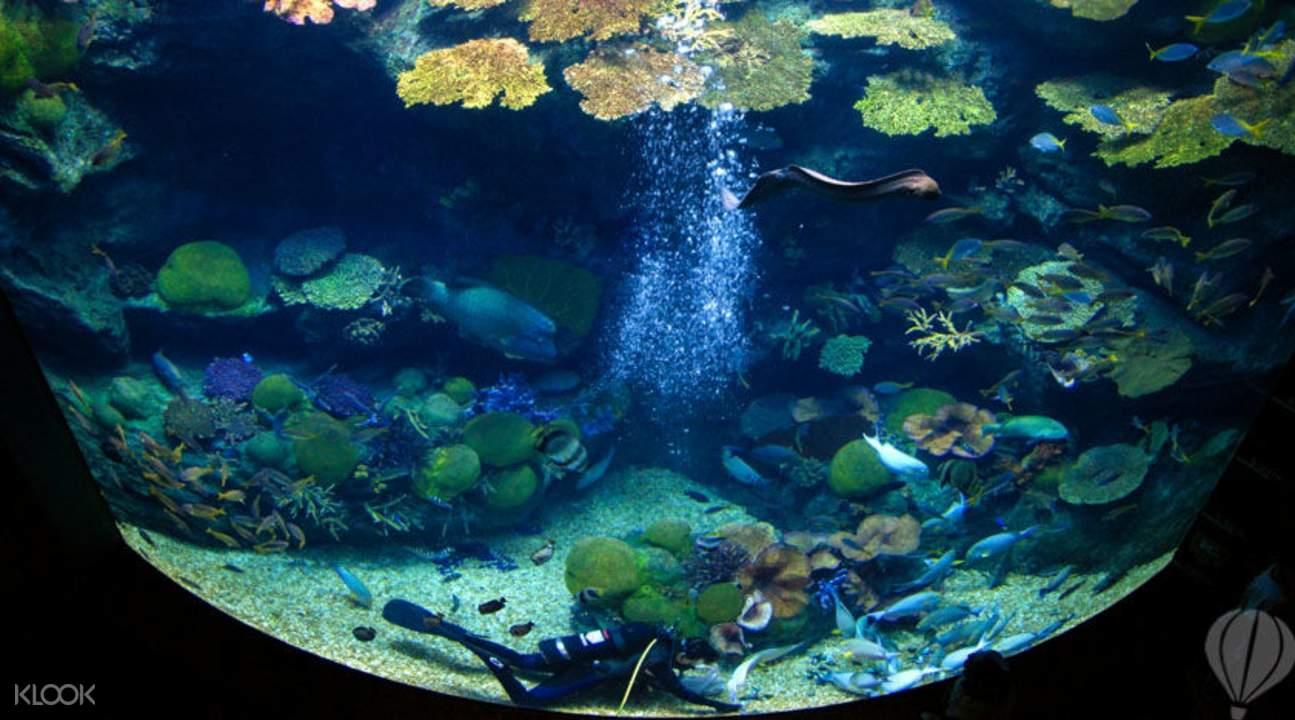泰國暹羅海底水世界優惠門票