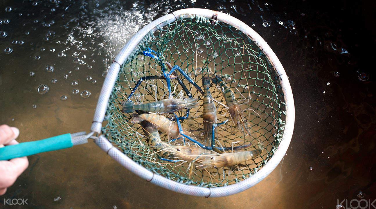 taiwan shrimp catching tour