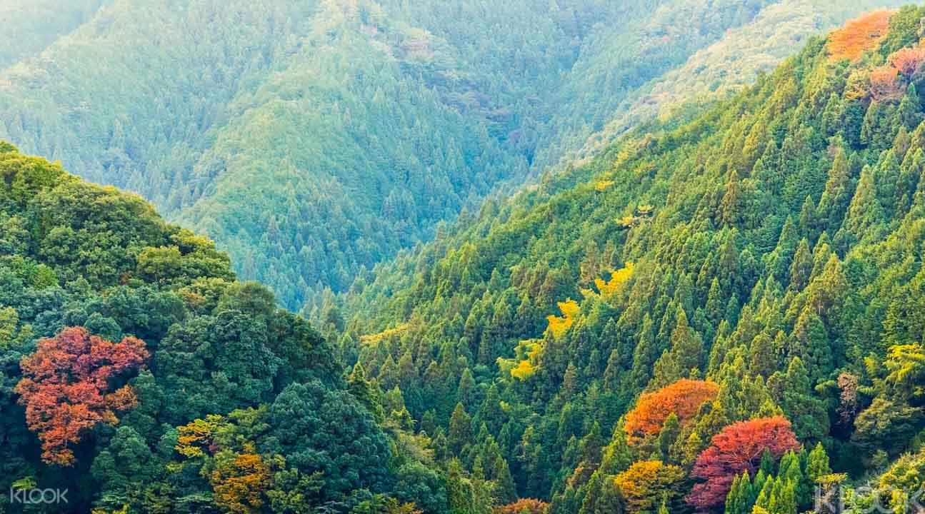 探尋日本佛教聖地:高野山