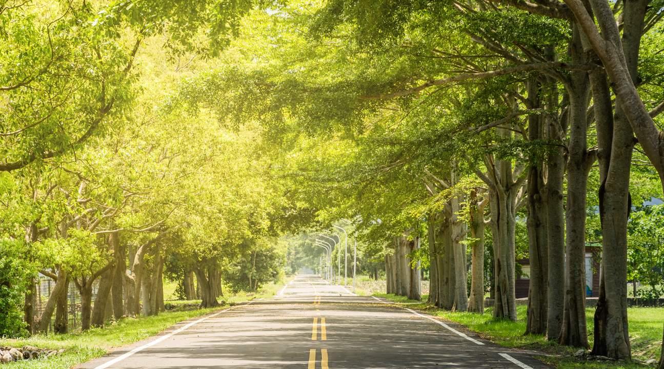 小叶榄仁绿色隧道,骑脚踏车感受最舒适的鹿野