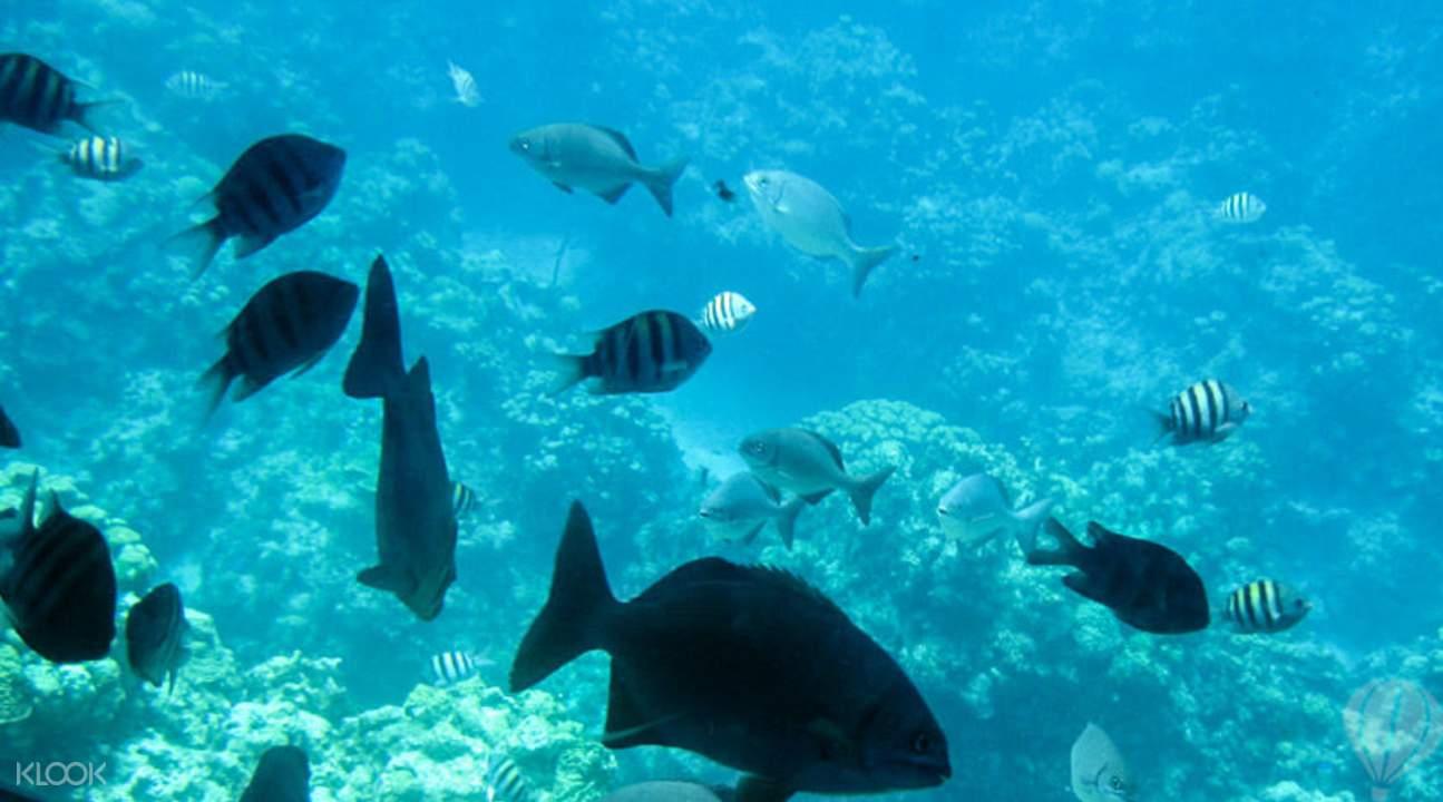Enjoy some Mauritius snorkeling