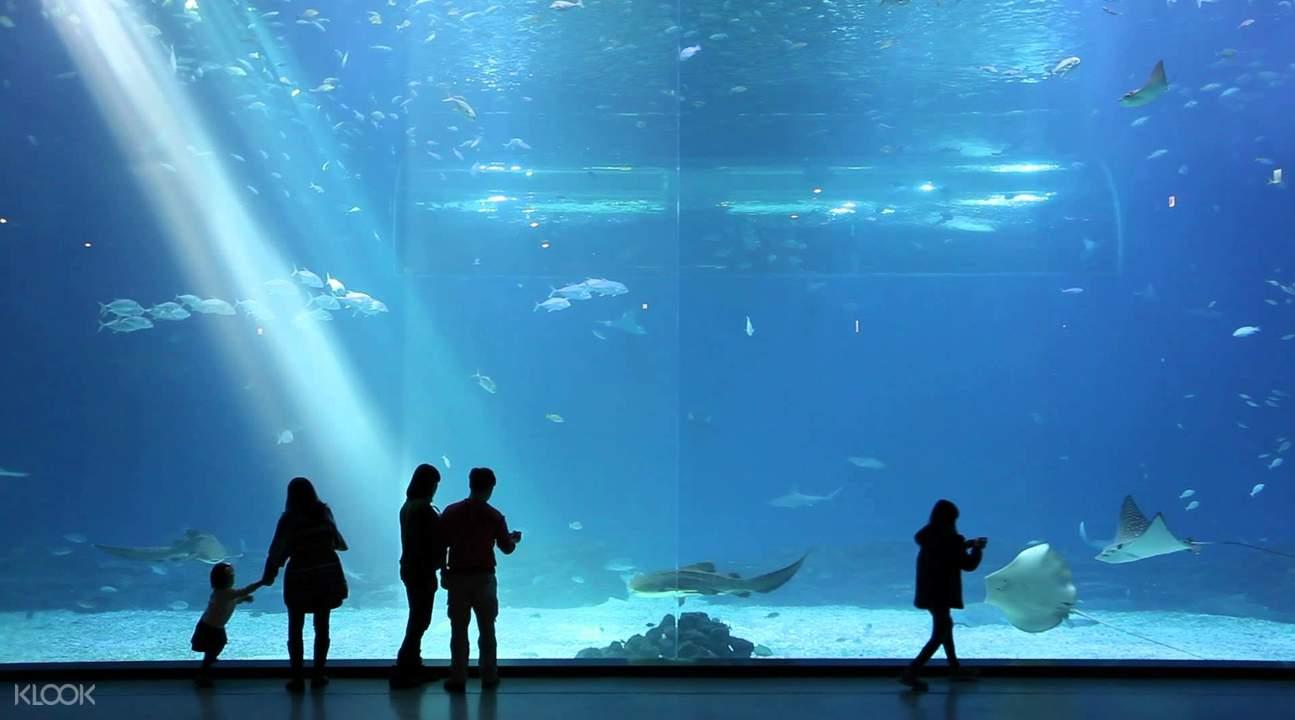 济州岛Aqua Planet水族馆