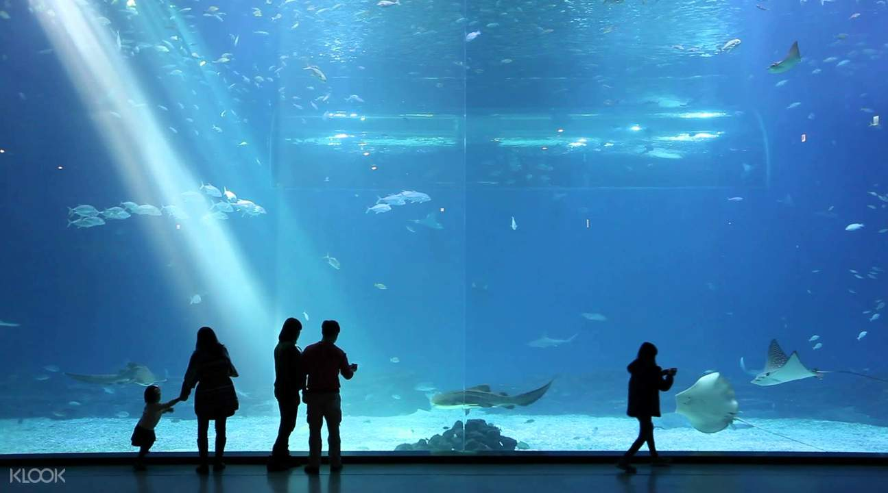 things to do in jeju aquaplanet