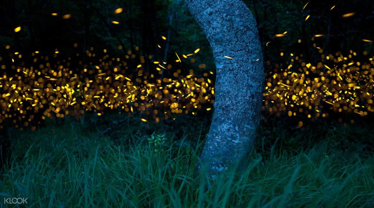 克丽丝河萤火虫探索