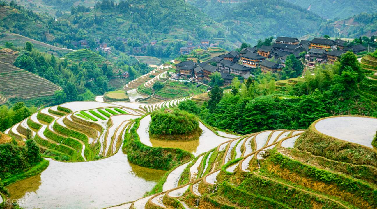 Longji Rice Terraces from guilin