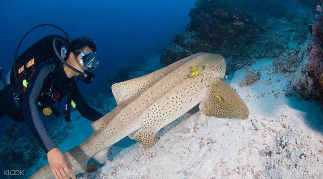 普吉島花島海域潛水