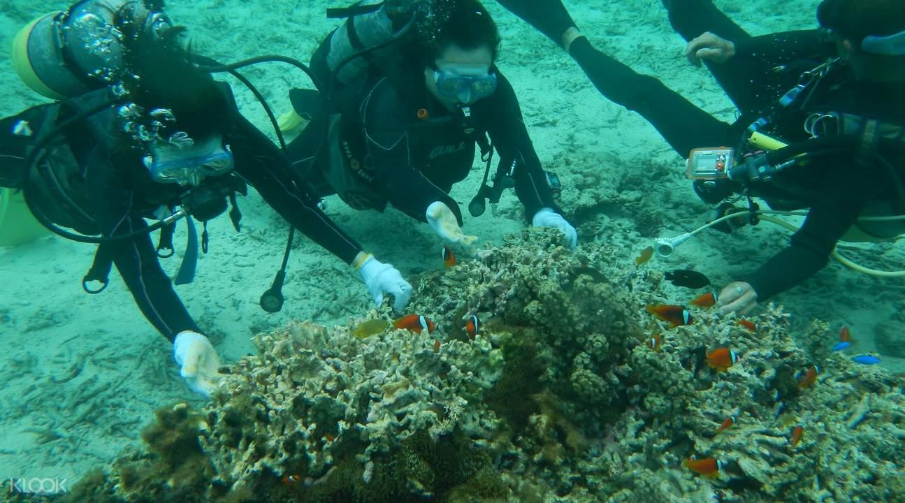沖繩 青洞潜水餵食魚群