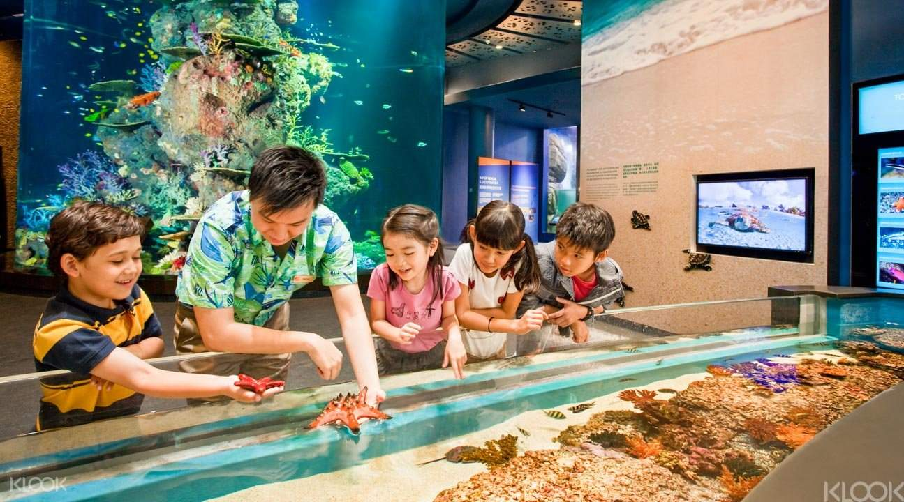 S.E.A. aquarium touch pool