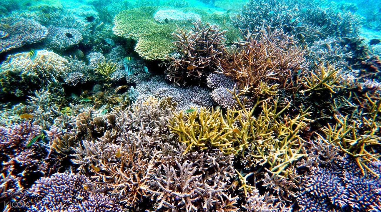 吉利群島浮潛