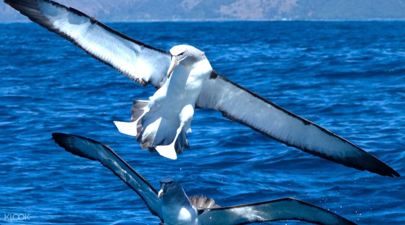 Kaikoura Bird Life